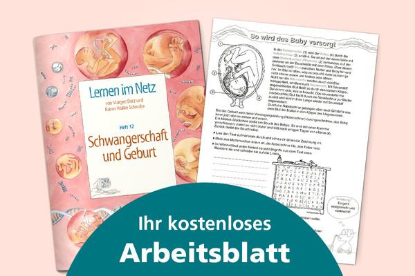 Ihr kostenloses Arbeitsblatt: So wird das Baby versorgt